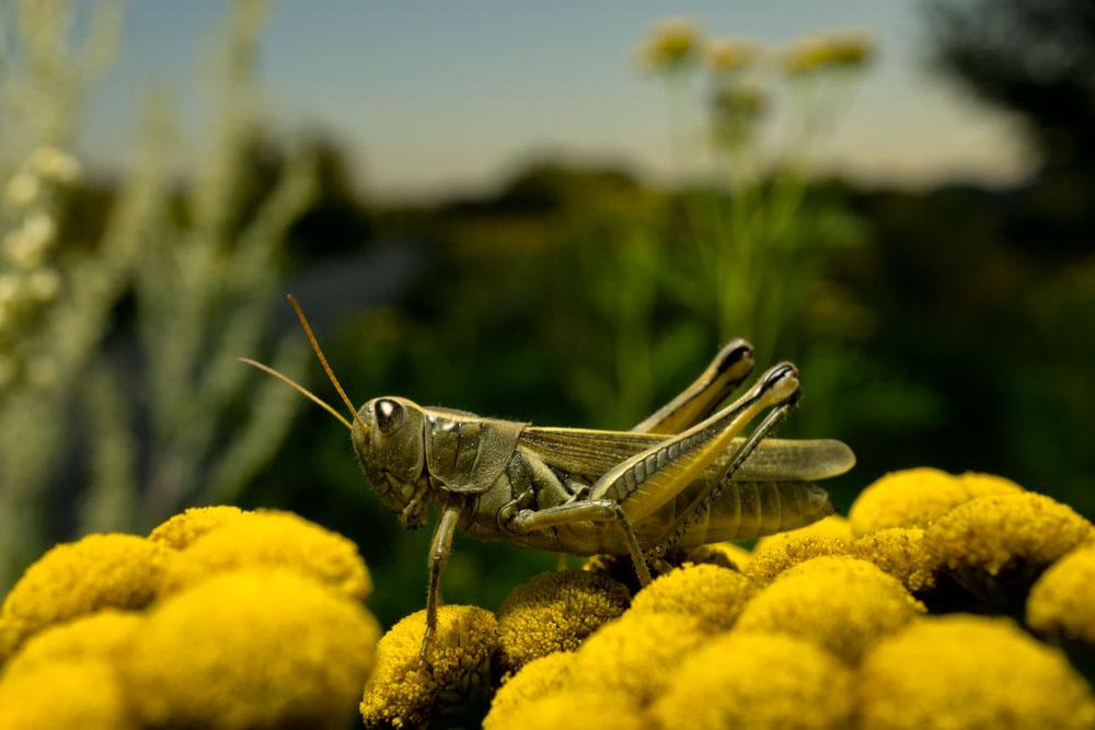 Grasshopper landscape
